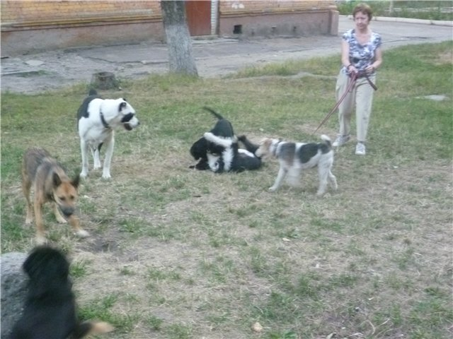 Моя первая собака. E88db6c11585