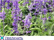 Наши домашние растения - Страница 2 261b6e16ae46t