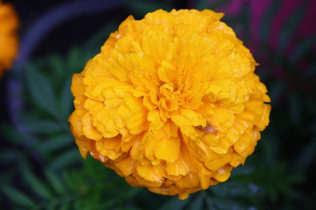 Растения от FILIGERa - Страница 2 Df1f58436fc3