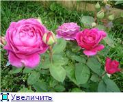 Розы 2011 Fbb29006014ft