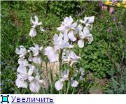Лето в наших садах 3423bea8045et