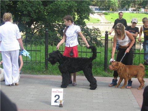 21.08.2011 Региональная выставка собак всех пород Ccdcb779dcc7