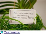 Выставка орхидей в Государственном биологическом музее им. К.А.Тимирязева 9e7a60ad47fbt