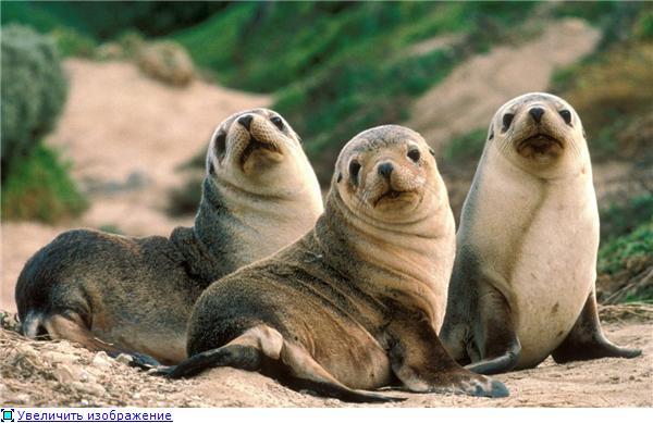 Фотографии разных животных F1bf1c367bd9t