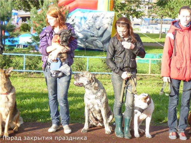 """Фотографии """"Бульмастиф и дети"""" Ecc0d9c13196"""