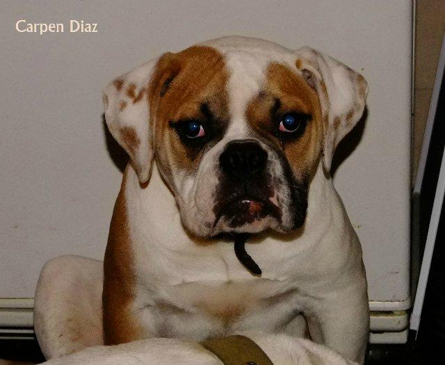 Собаки питомника Carpen Diaz - Страница 2 97df415c4bac