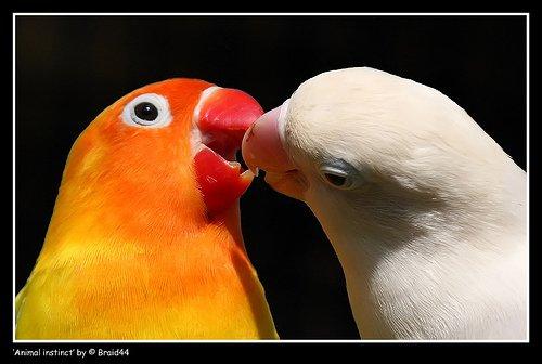 Фото птиц 4fa10feb3bb3