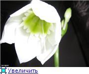 Красота без границ - Страница 3 24b56efec268t