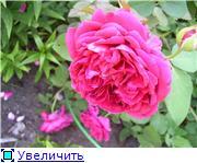 Лето в наших садах - Страница 2 5fdd57f6512bt