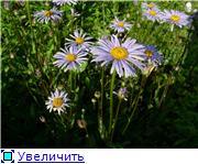 Лето в наших садах - Страница 4 7a9c75238e77t