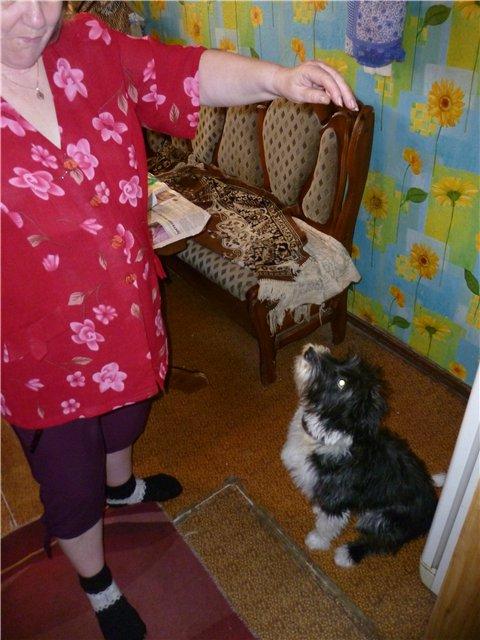 Моя первая собака. 03e412b842a3