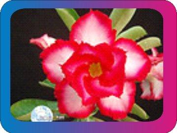 продам семена экзотических растений - Страница 3 57711a10b16c