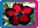 продам семена экзотических растений - Страница 3 C9ffede81087