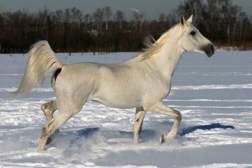Лошади 1a9e1f1b7a5e