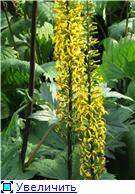 Растения для тени или Тенистый сад. 4de76d38d46et