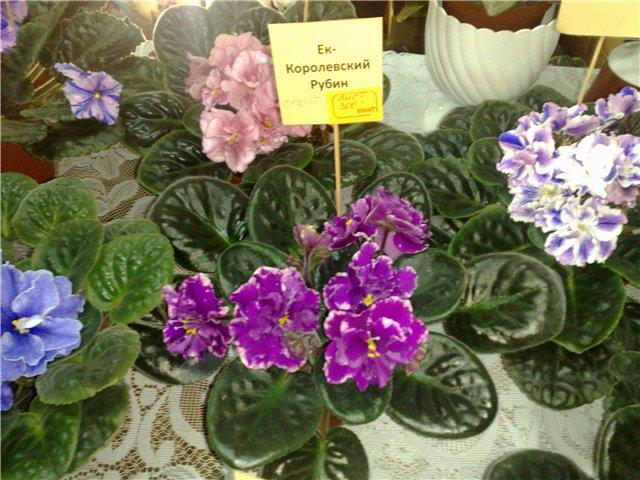 «Цветы.Ландшафт и Приусадебное хозяйство Весна - 2010» 6aca71a64830