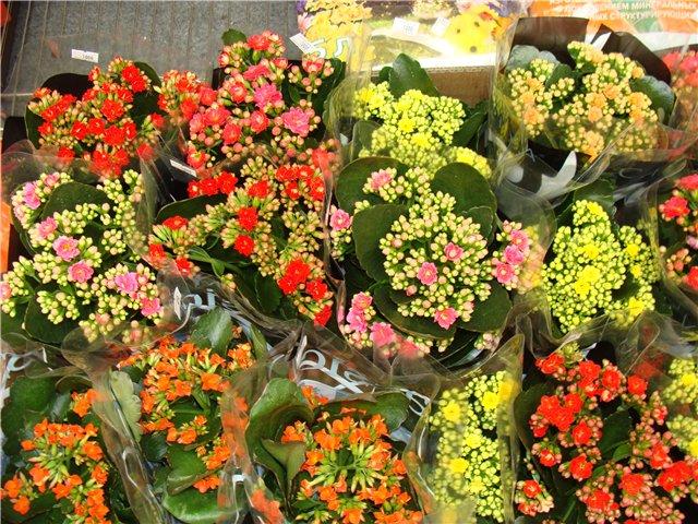 Международая выставка «Цветы.Ландшафт .Усадьба 2010» Астана - Страница 2 E9290cafe441