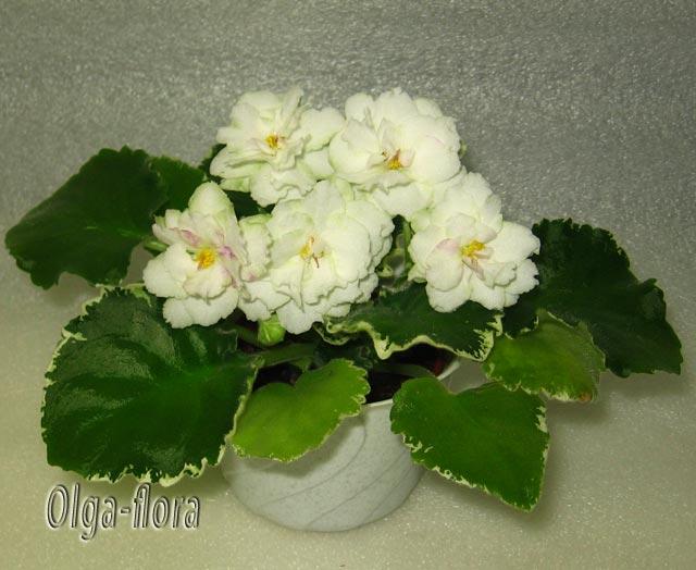 Cool Mint   (Sorano) - Страница 2 60004191b6d9