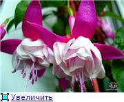 ФУКСИИ В ХАБАРОВСКЕ  - Страница 2 89c8988276cft