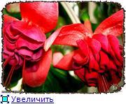 ФУКСИИ В ХАБАРОВСКЕ  78fa5fcb1189t
