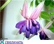 ФУКСИИ В ХАБАРОВСКЕ  - Страница 3 15a77f82db79t
