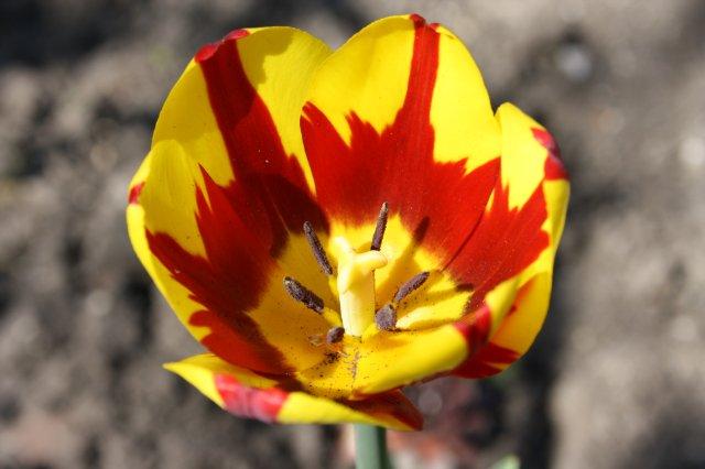 Растения от FILIGERa - Страница 3 5dee79448480
