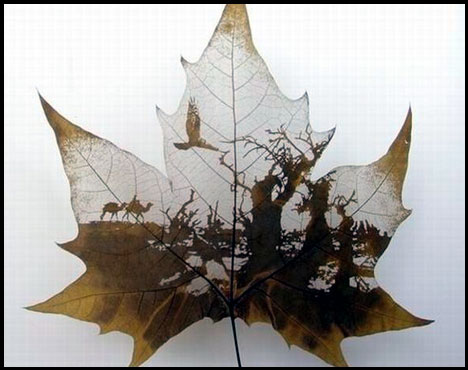 Креатив на кленовых листьях 179319a823c0