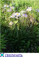 Лето в наших садах - Страница 4 F6a684404b88t