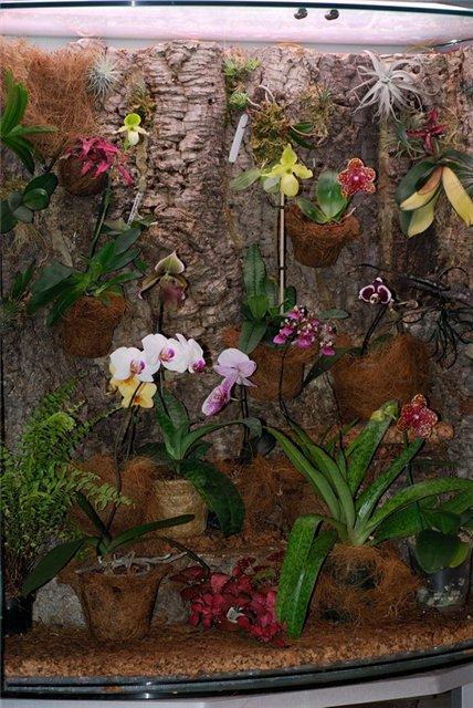 Размещение орхидей 480d36170f3d