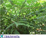 Лето в наших садах - Страница 4 77e513a4c0cbt