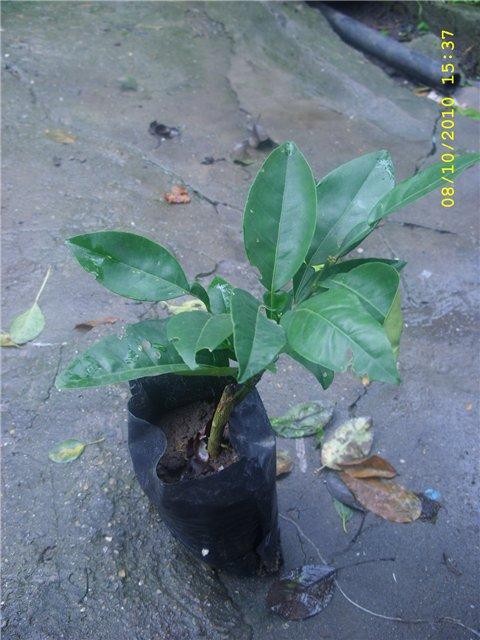 Растения из Сочинского питомника - Страница 3 63ffc21c84cc