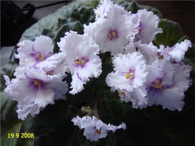 мои любимые цветочки - Страница 2 36cf3084e5bc