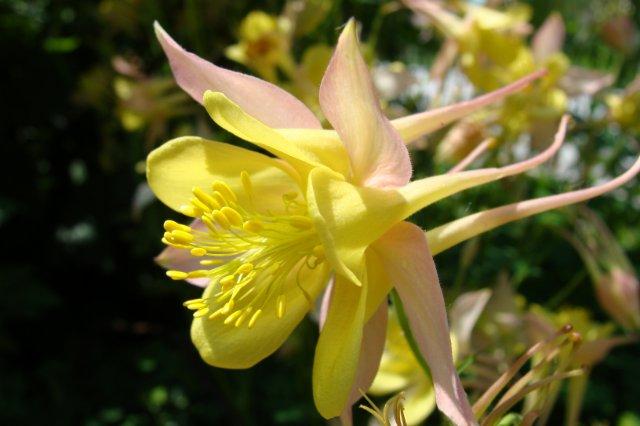 Многолетние растения 17bd624972db
