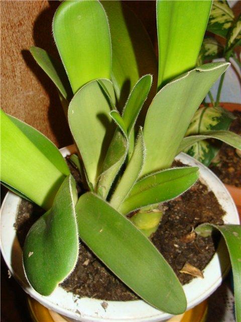 Как называется растение E7684375eb36