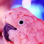 Аватары с животными - Страница 3 09b26a3fc699