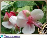 ФУКСИИ В ХАБАРОВСКЕ  - Страница 3 76ea10e8fa9bt