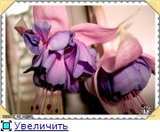 ФУКСИИ В ХАБАРОВСКЕ  636f1b59e3bat