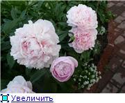 Лето в наших садах - Страница 2 18e988f57359t