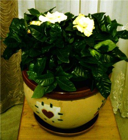 Разводите ли дома цветы и какие? - Страница 11 F1c35958e90c
