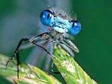 Невероятные факты из жизни насекомых 824e4ec37c00