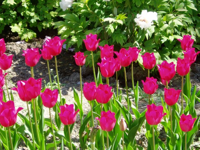 Крым. Никитский ботанический сад. 11a41905e21a