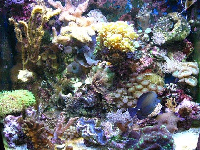Аквариум. Море - Страница 6 173b85015bf0