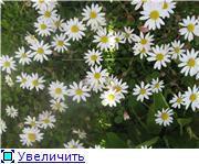 Растения для альпийской горки. 3d0850d488c2t