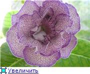 Семена глоксиний и стрептокарпусов почтой - Страница 7 06d681844302t