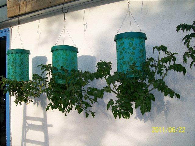Технология выращивания помидоров (томатов) вниз головой 22d01c6741ae