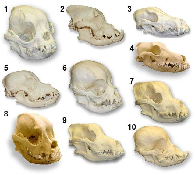Как человек изменял диких животных? 4ba04c80842f