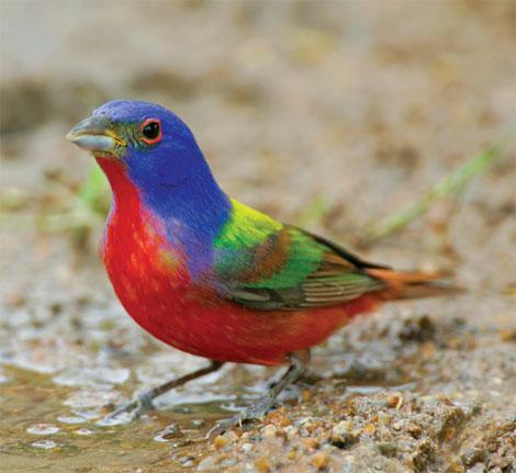 Фото птиц 392149f8e82b