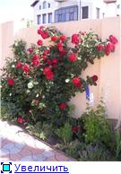 наши домашние цветники - Страница 2 0d33d4fa19cct