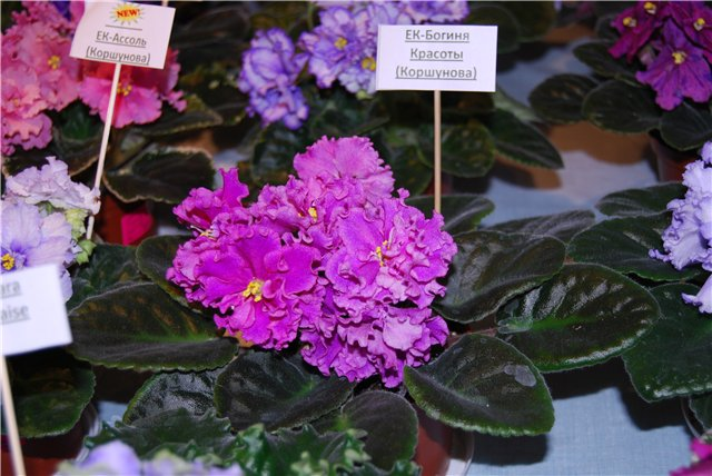 «Цветы.Ландшафт и Приусадебное хозяйство Осень-2009» - Страница 3 Fe44e65aee13