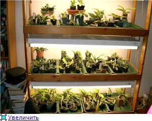 Размещение орхидей Cd7aa5fede4at